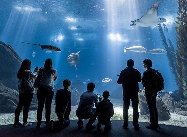 oceanario de lisboa apresentacao das atividades