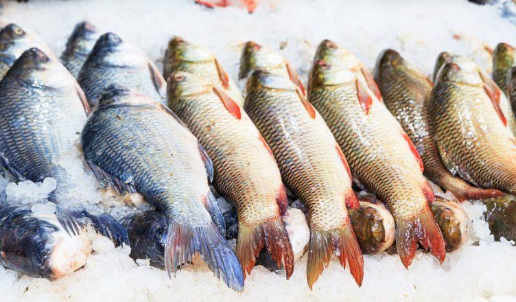 lojas peixe fresco porto